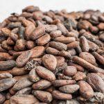 Prawdziwe ziarna kakaowca